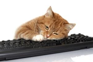 Описание электронного ресурса в источниках